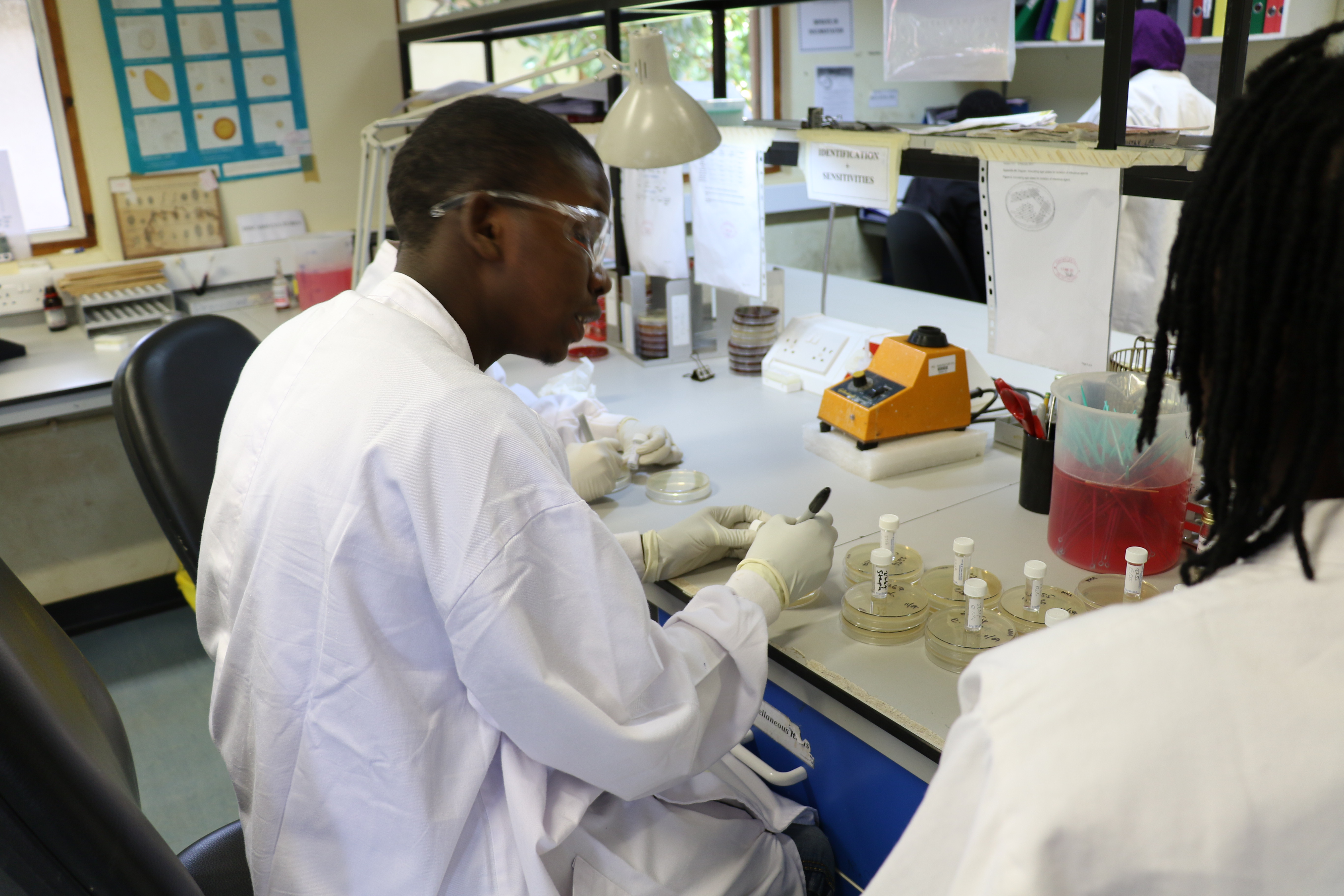 Lab scientist at MRC Unit The Gambia at LSHTM in Fajara