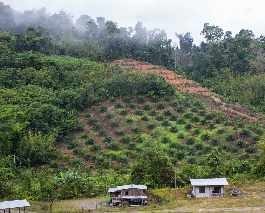A land clearing in Sabah, Malaysia