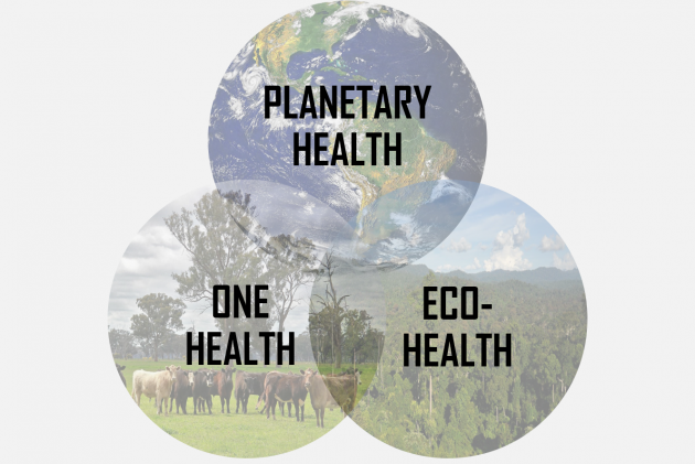Three images set in a venn diagram layout showing earth for planetary health, cattle for one health and a rainforest for eco-health