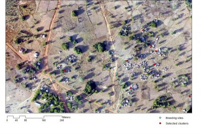 Figure 1. Aerial imagery collected by unmanned aerial vehicle (UAV or drone) of households and larval habitats for the INDIE malaria project in Sapone, Burkina Faso (credit: Nombre Apollinaire and Kimberly Fornace)