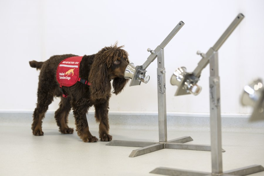 UK Government supports COVID-19 detection dogs trial