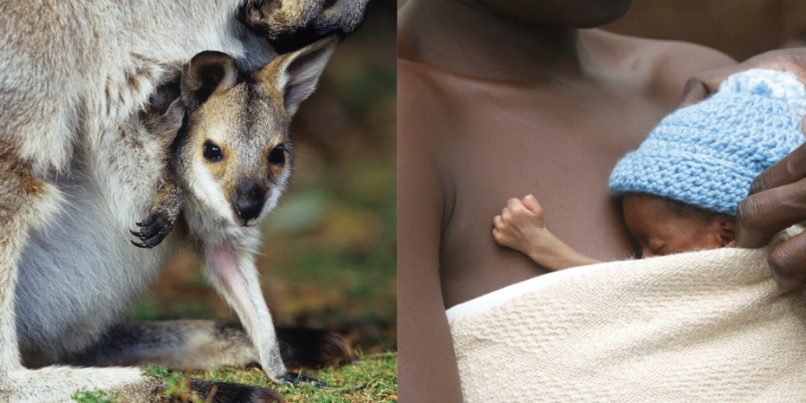 Just like a baby kangaroo sits in his mother's pouch, kangaroo mother care involves skin-to-skin contact