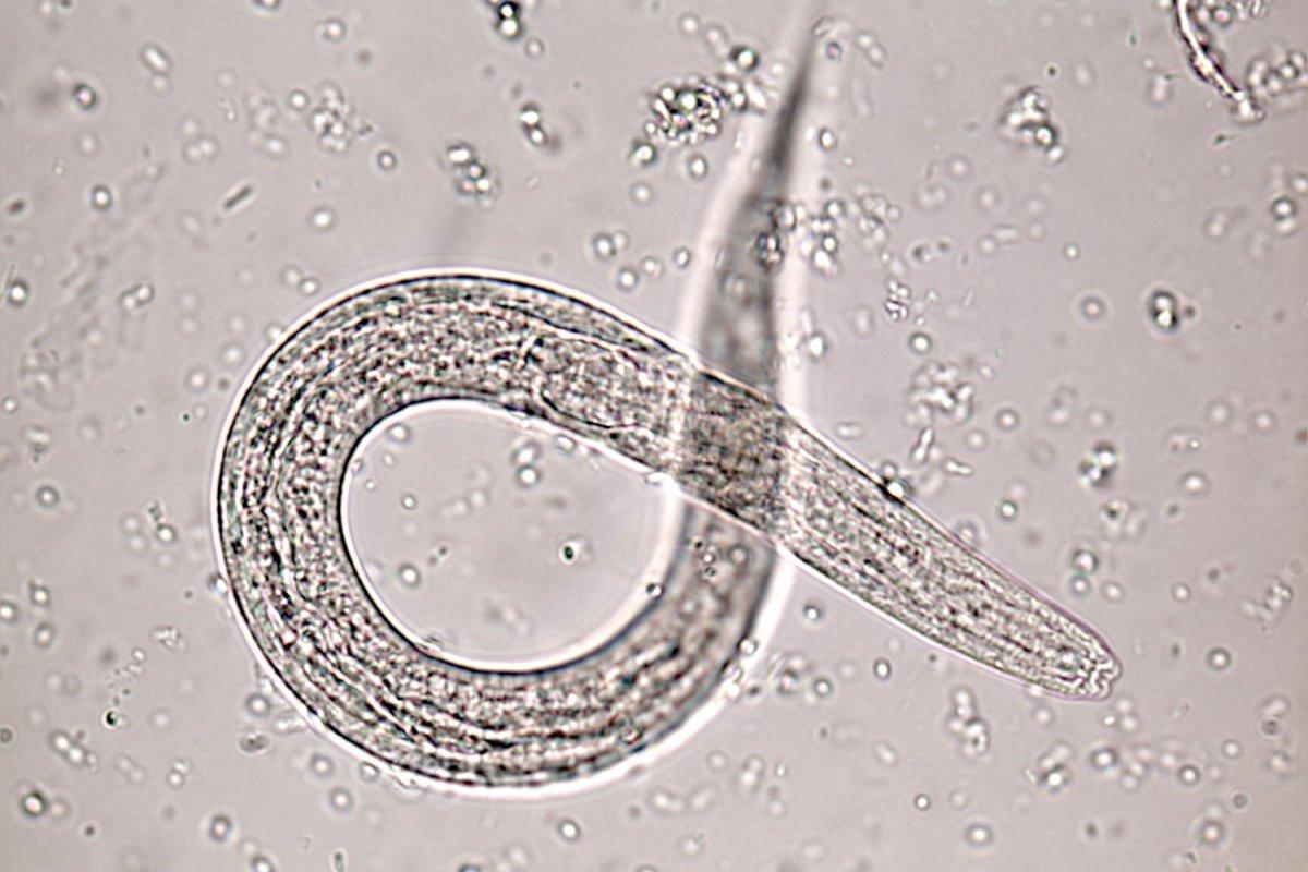 Diagnostic Parasitology Laboratory   LSHTM