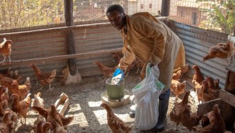 Farmer provides food to chickens in Uganda