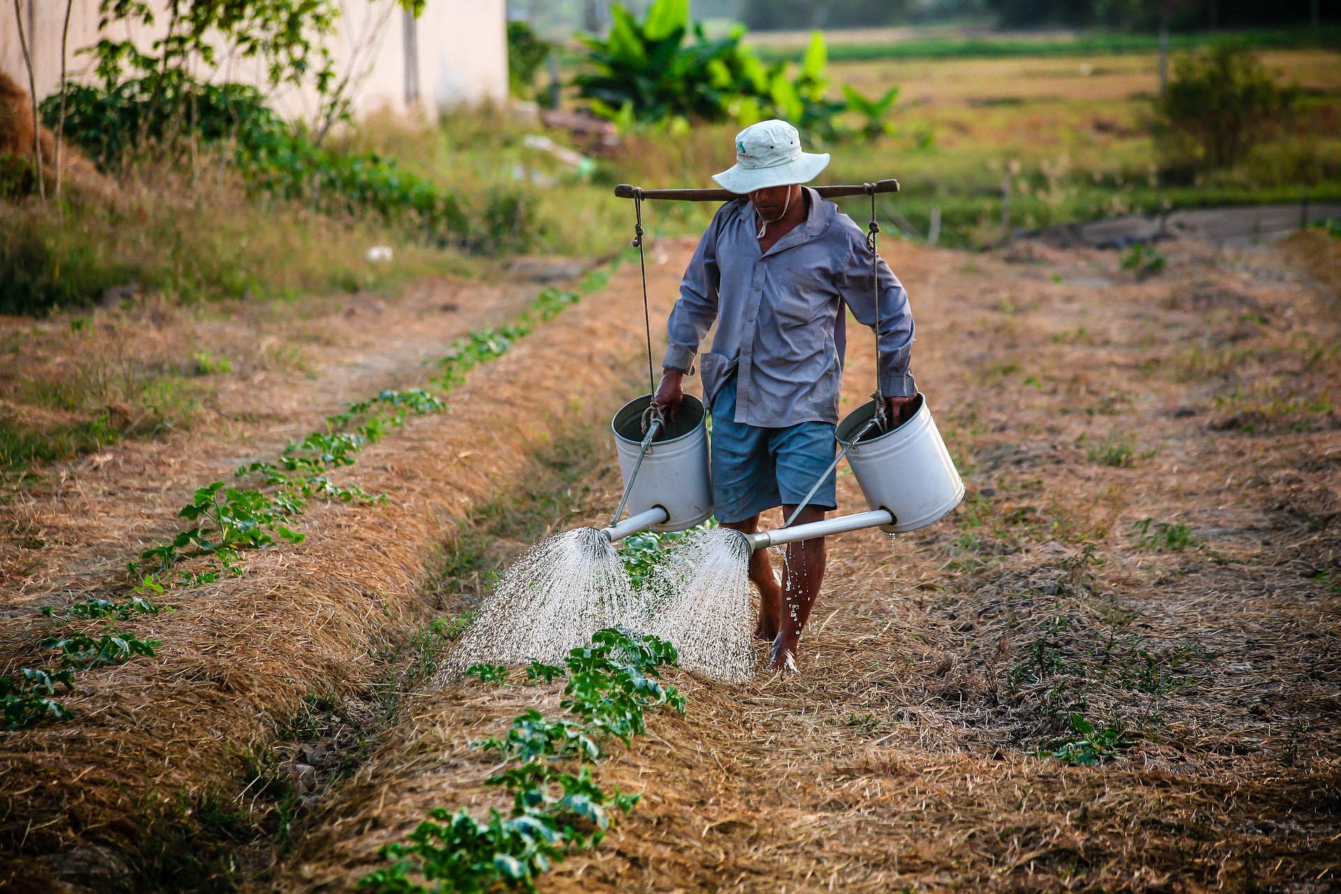 Man with watering can. Source: Pixabay